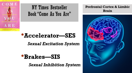 sexual accelerator and brakes CHART